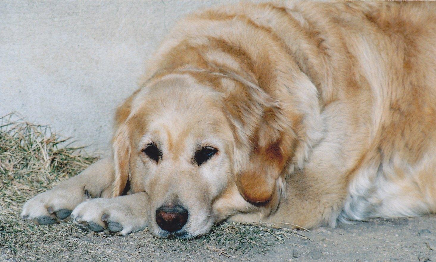 19990115_6